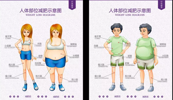 帮助健康减肥的软件