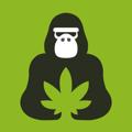 猩猩草 v1.0 安卓版