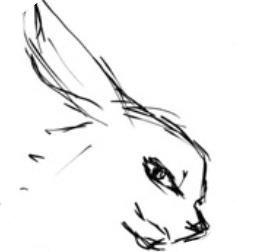 夜兔漫画 v1.0
