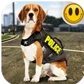 模拟警犬训练