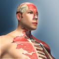 人體模型模擬器