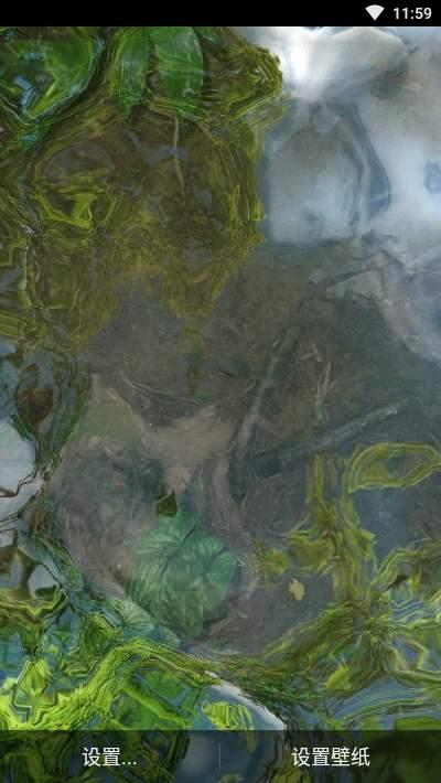 鱼池动态壁纸