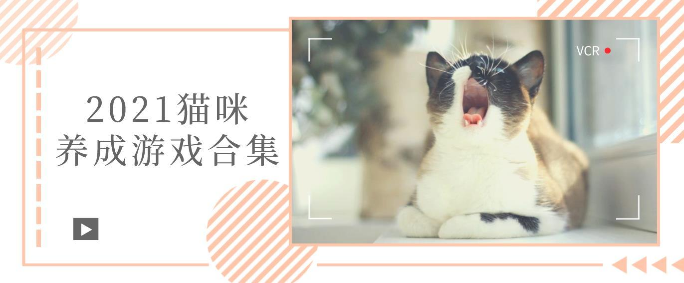 2021猫咪养成游戏合集