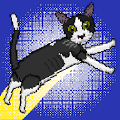 24只貓 v1.0.5
